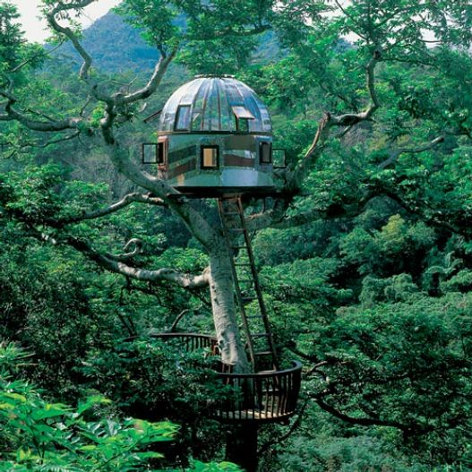Tree House on Okinawa