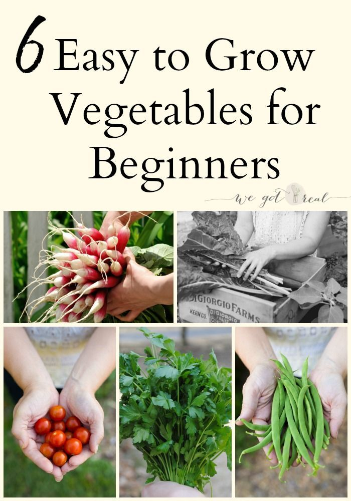 6 Easy To Grow Vegetables For Beginners We Got Real