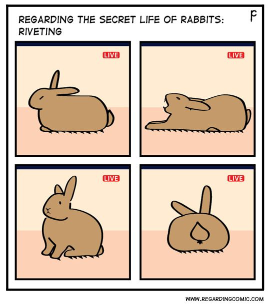 Regarding The Secret Life Of Rabbits Photo Secret Life Of
