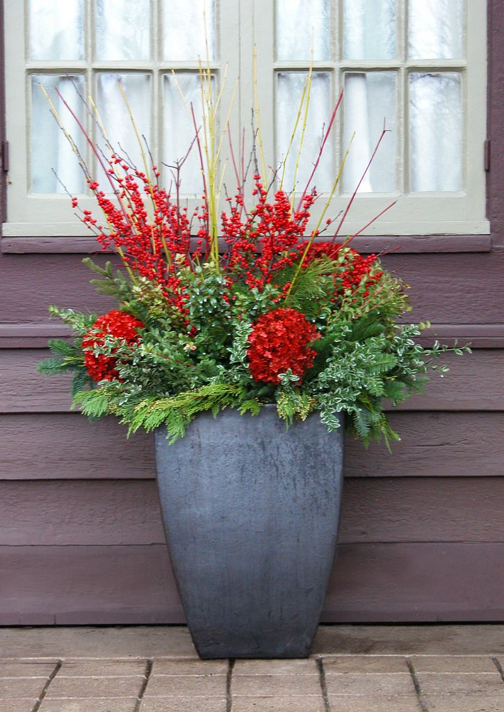 Christmas Container Planting | Winter container plantings by… | Flickr