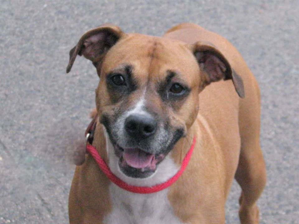 URGENT - Brooklyn Center   ARVIL - A0980709   Main Thread: https://www.facebook.com/photo.php?fbid=684949161517966&set=a.617941078218775.1073741869.152876678058553&type=3&theater