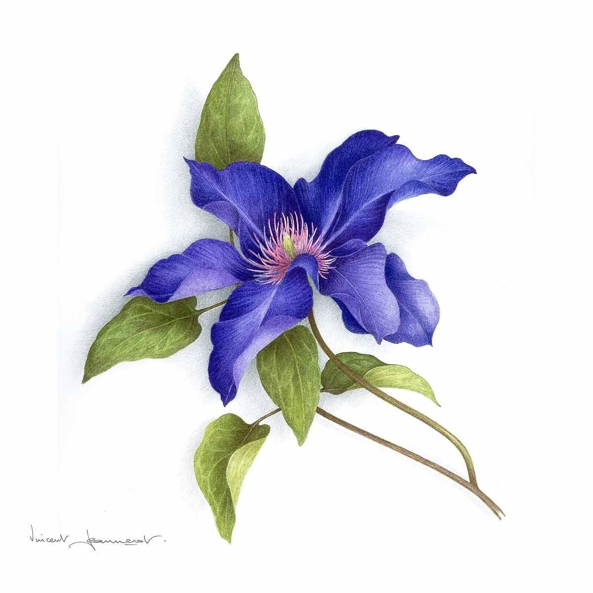 Aquarelle Vincent Jeannerot Aquarelle Aquarelle Fleurs Et Art