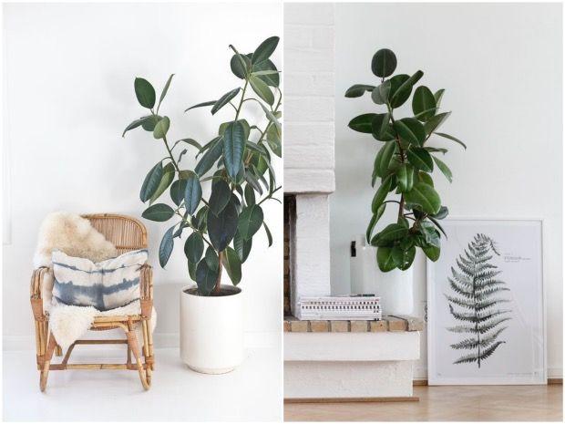 bien choisir sa plante d 39 int rieur int rieur scandinave chemin e et plantes. Black Bedroom Furniture Sets. Home Design Ideas