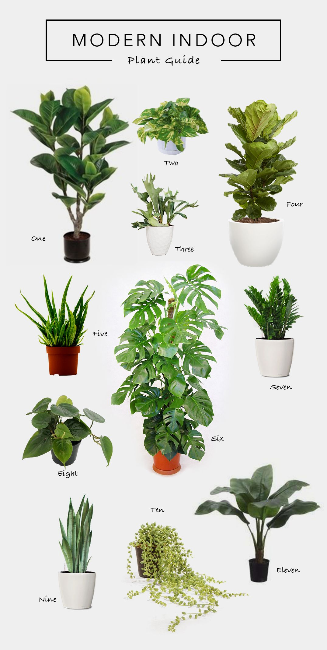 Modern Indoor Plant Guide House Plants Living Room Plants