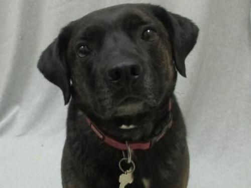 Adopt a Pet Humane society, Pets, Adoption