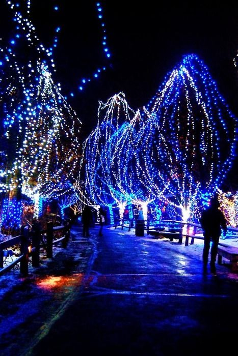 Reasons For Loving Seasons Christmas Lights Background Blue Christmas Lights Christmas Light Tour