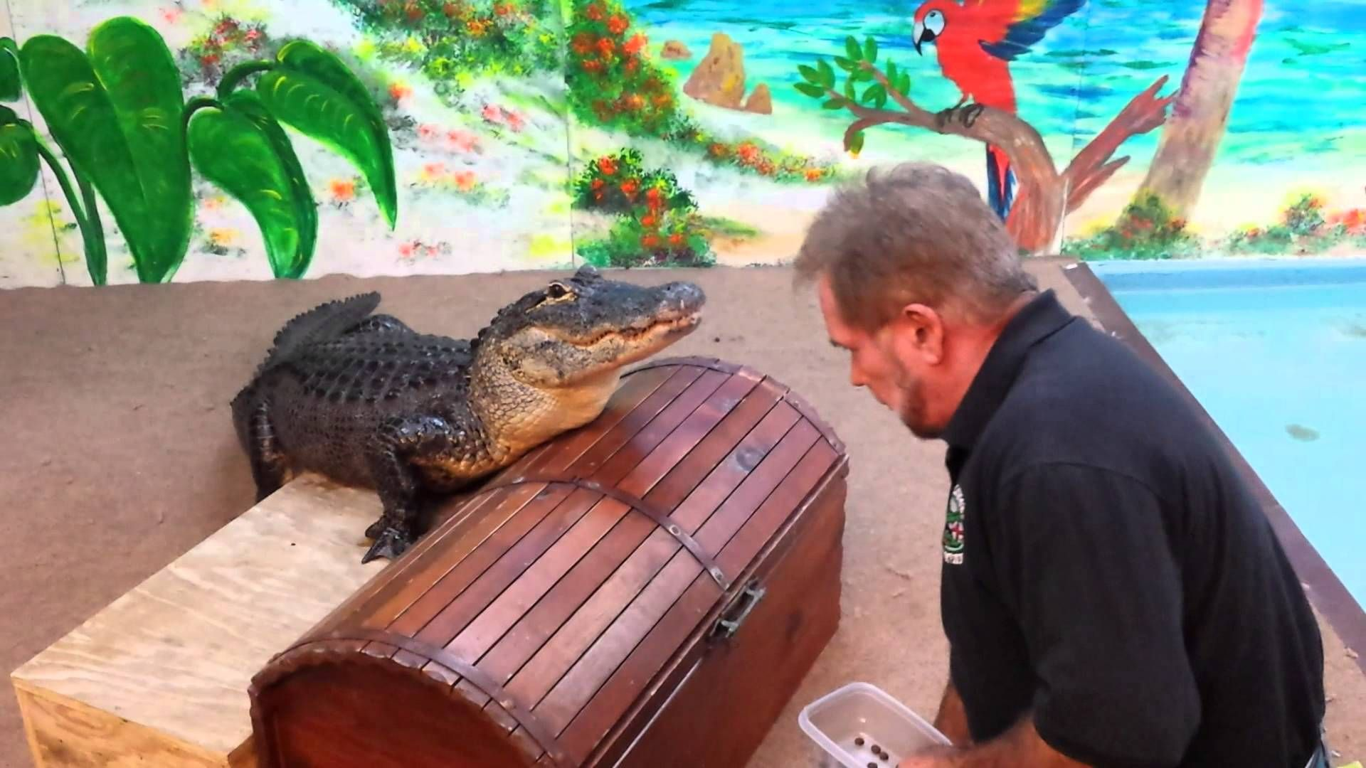 The Alligator Attraction John S P Madeira Beach Fl