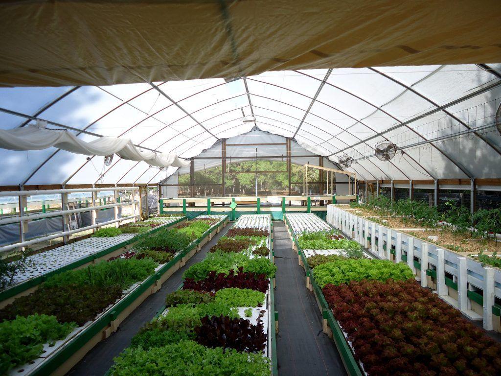 Aquaponic Farming Business Plan Plans Commercial