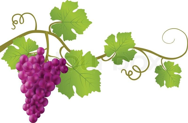 Image Result For Grapevine Leaves Clipart Grape Vines Grapes Grapevine Leaf