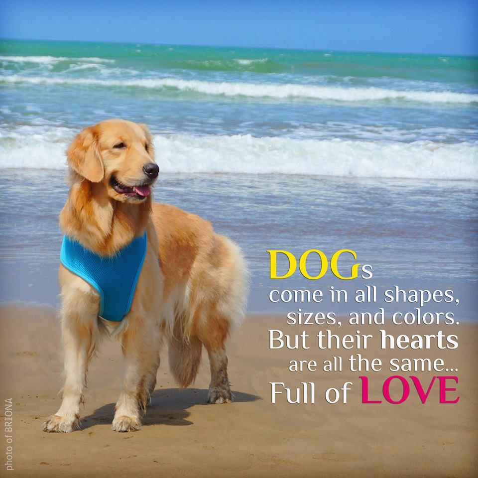 My Daughters Loves The Beach Goldens Dog Quotes