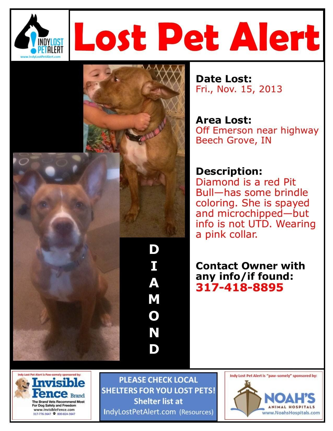 Lostdog 11 15 13 Indianapolis In Emerson I 465 Beech Grove Red Pitbull Spayed Female Brindle Pink Collar 317 418 8 Losing A Dog Losing A Pet Pink Collars