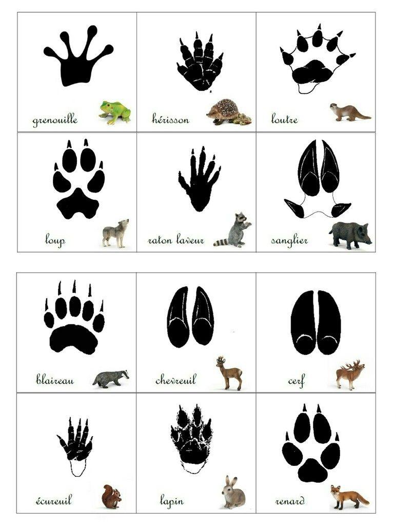 Gut bekannt Empreintes animaux de la forêt | Animaux/Insectes | Pinterest  CN17