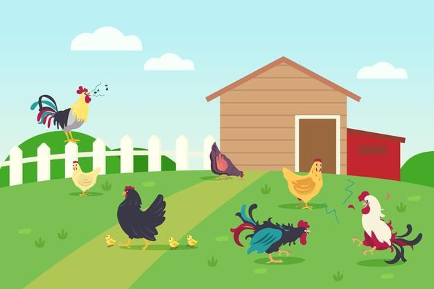 Download Live Of Hens And Roosters In Countryside for free