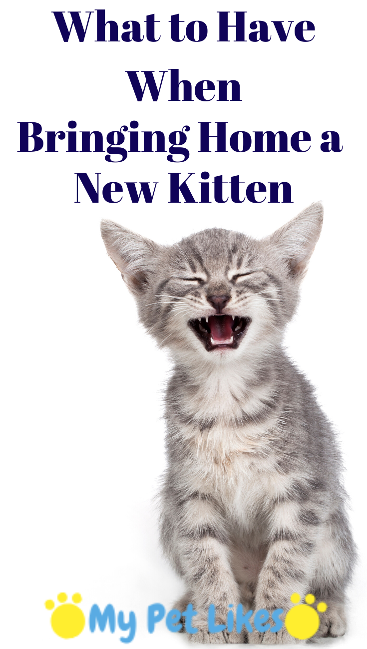 What To Have When Bringing Home A New Kitten Cat Training Cat Advice Kitten