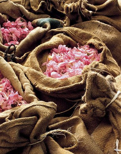 Flower Petals Used To Make Fragonard Perfume In Grasse France