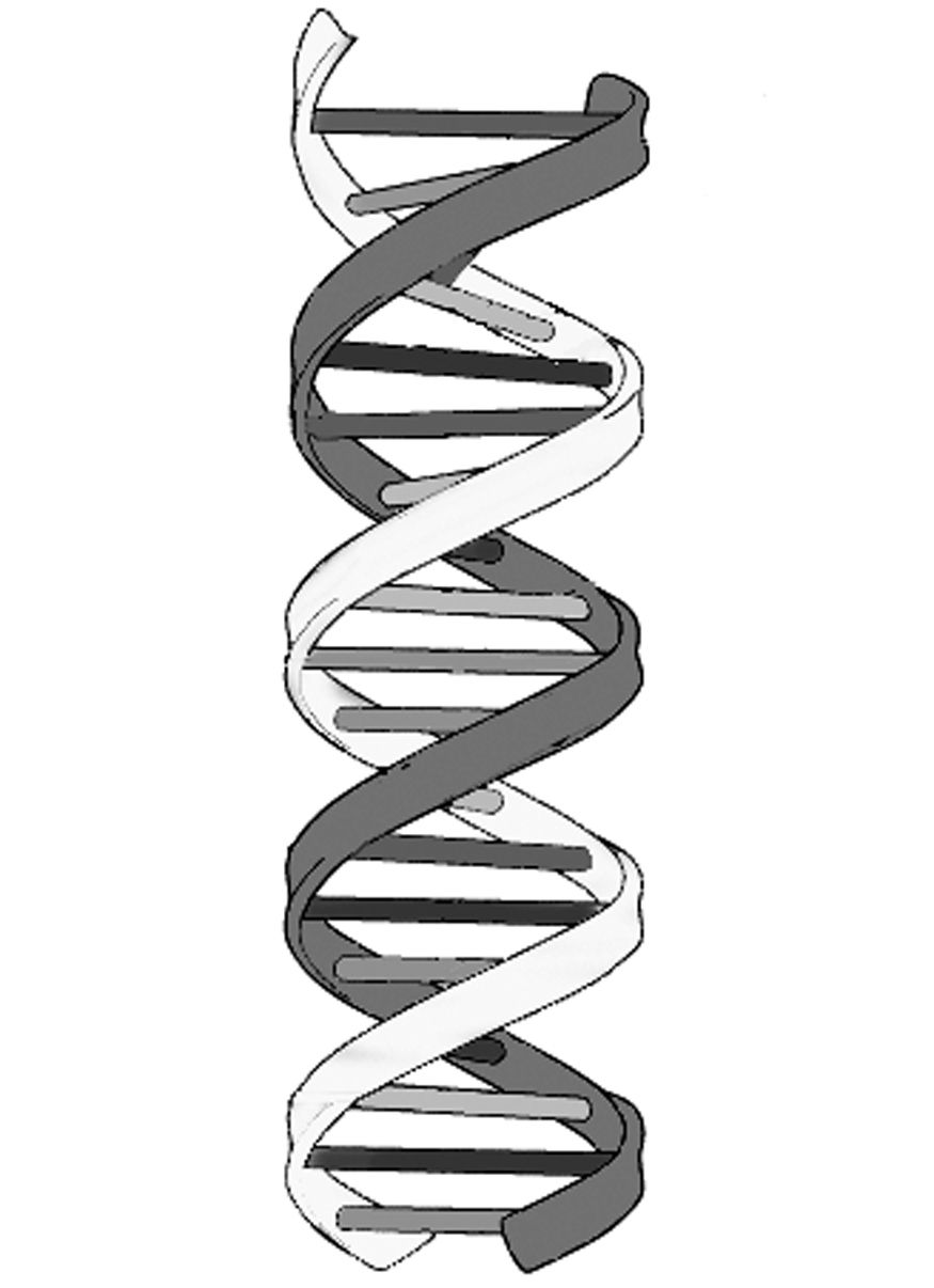 Dna Easy Drawing : drawing, STRUCTURE, Drawing,, Drawings,, Double, Helix