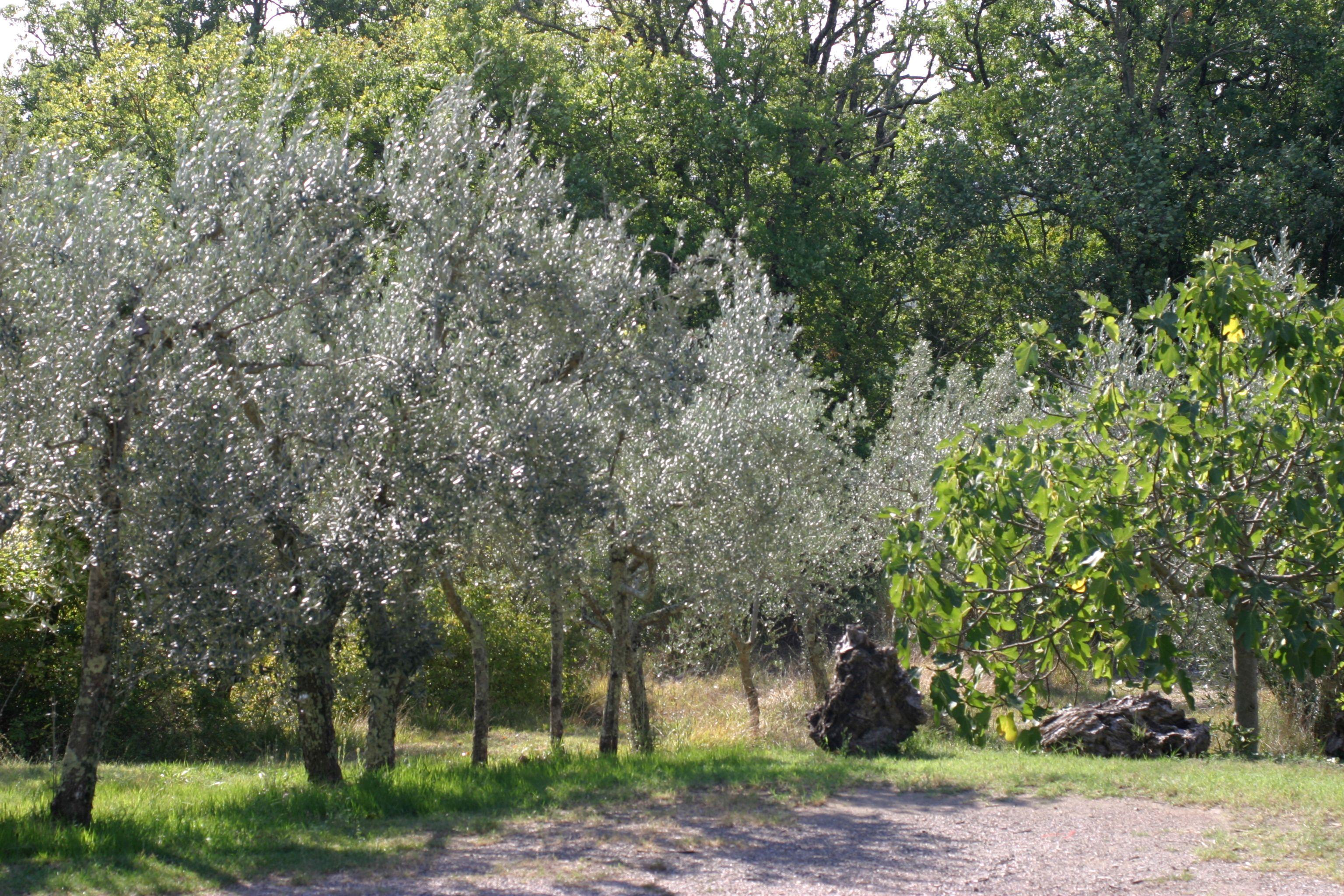 Olivenhain am Haus