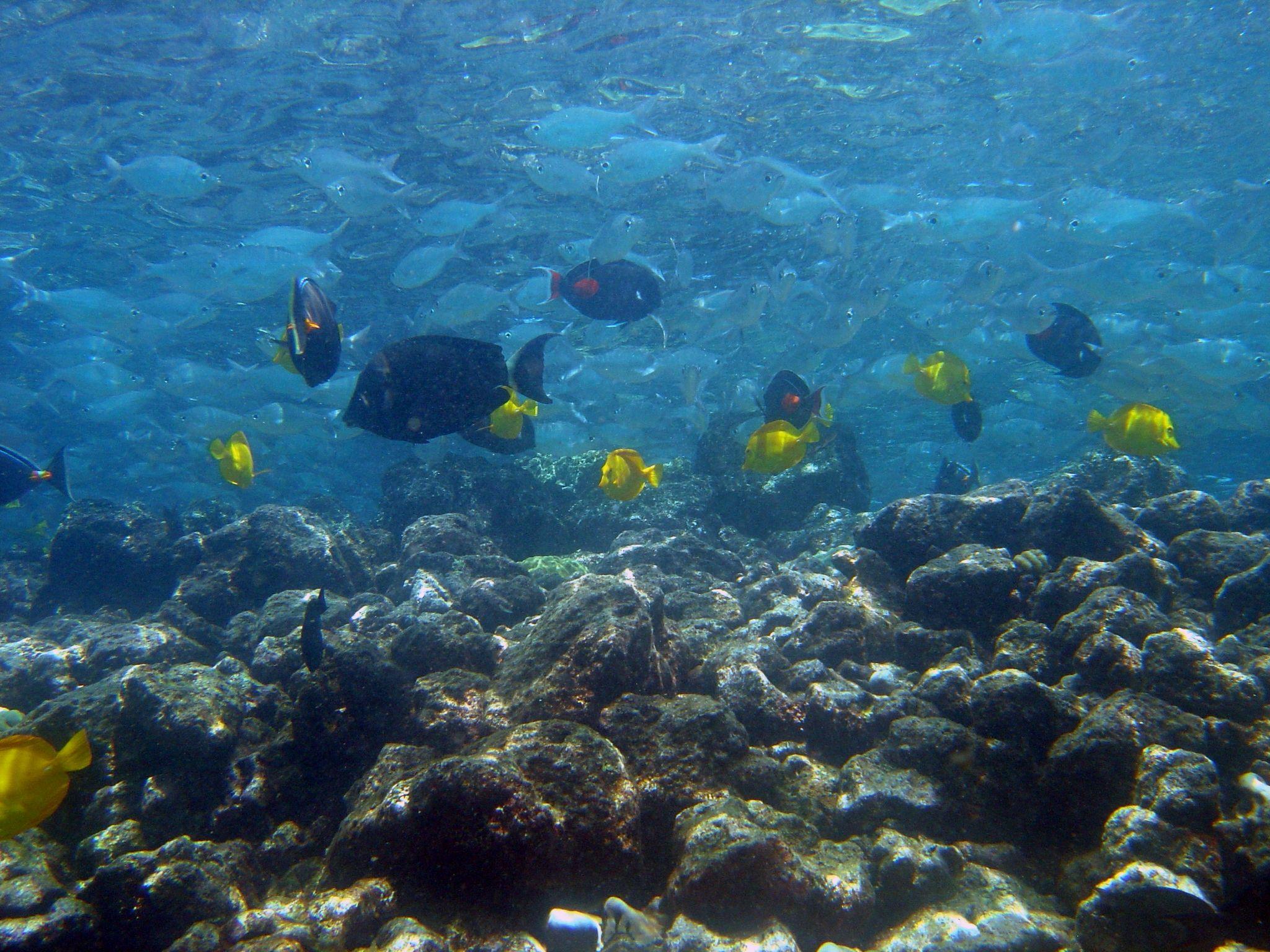Sex pakisthan picture of hawaiis black coral gay pornstar