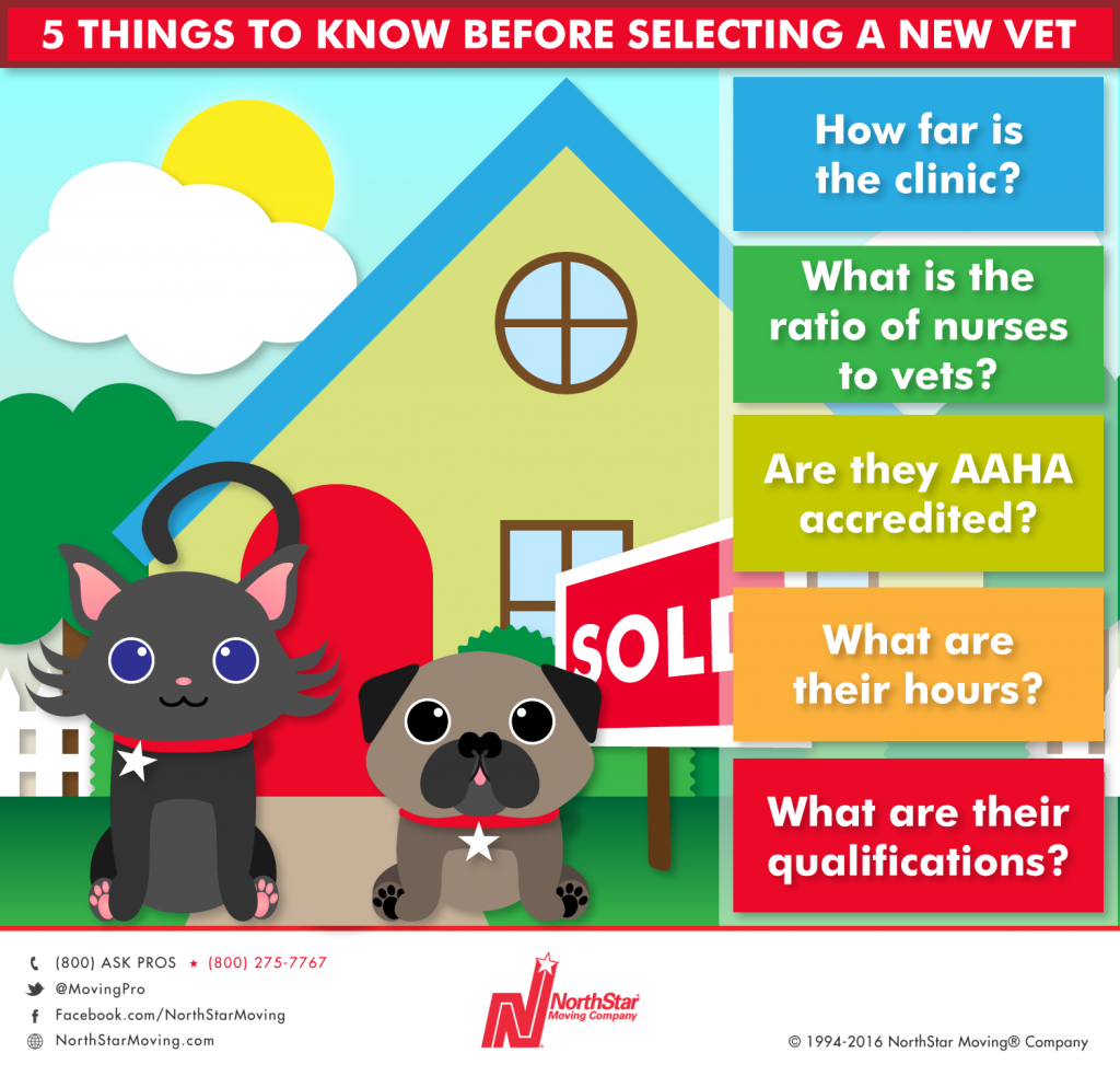 How To Find The Right Vet After A Move Vets Furry Friend Moving