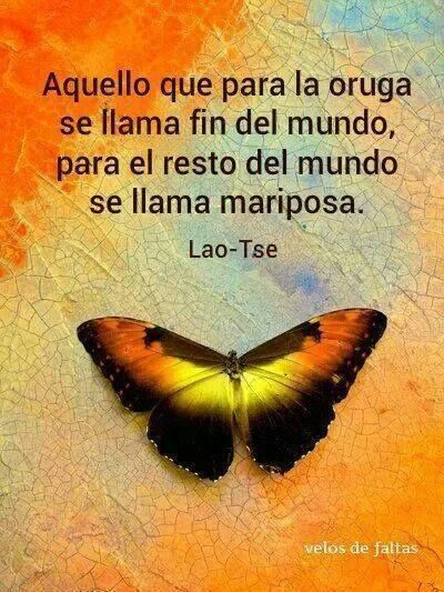 Butterfly Frases Mariposas Frases Y Frases Pensamientos