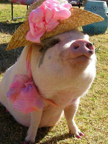 Mrs. Pig Jajajajajaja
