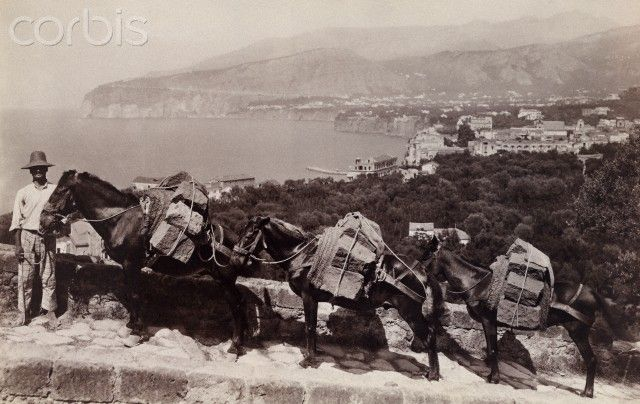 Italian Vintage Photographs ~ #Italy #Italian #vintage #photographs ~ Mules are used for carrying blocks of stone up Sorrento's hillside - 1916   #TuscanyAgriturismoGiratola