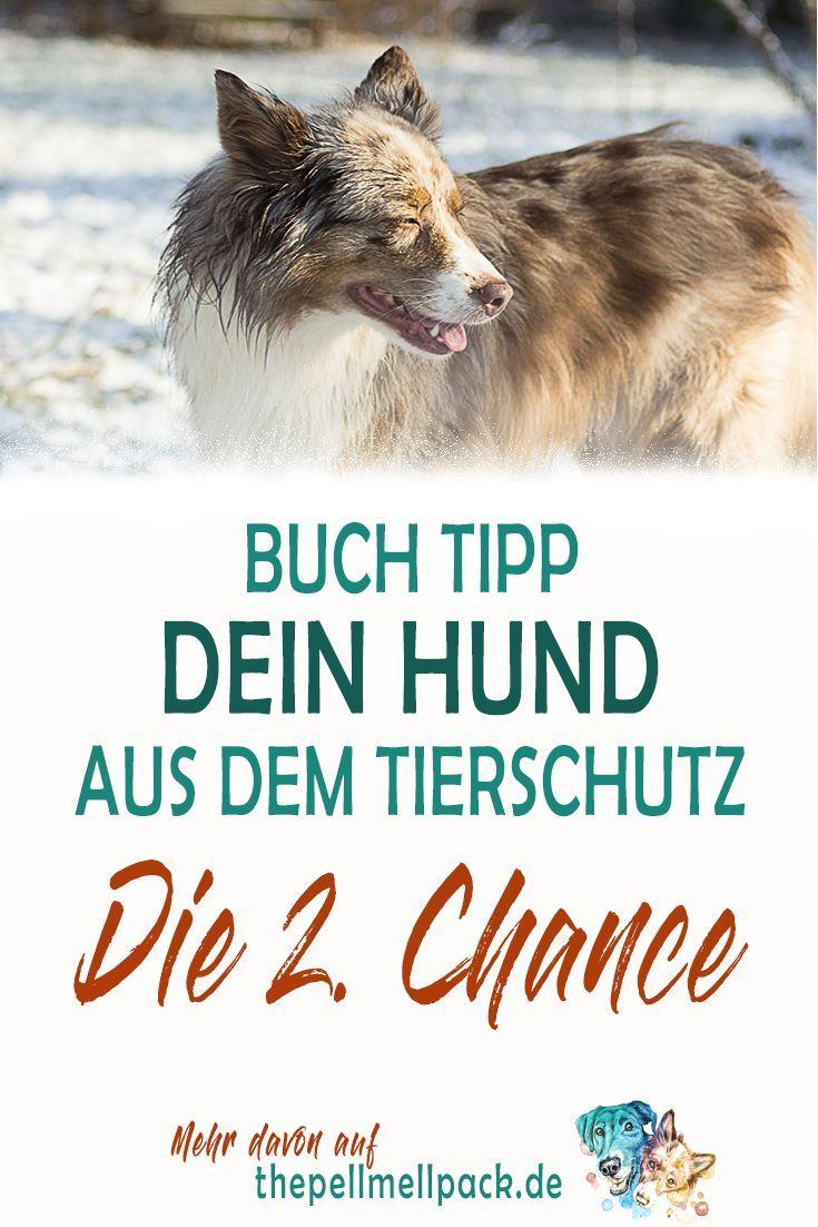 2nd Chance Hund das Überraschungspaket [Anzeige