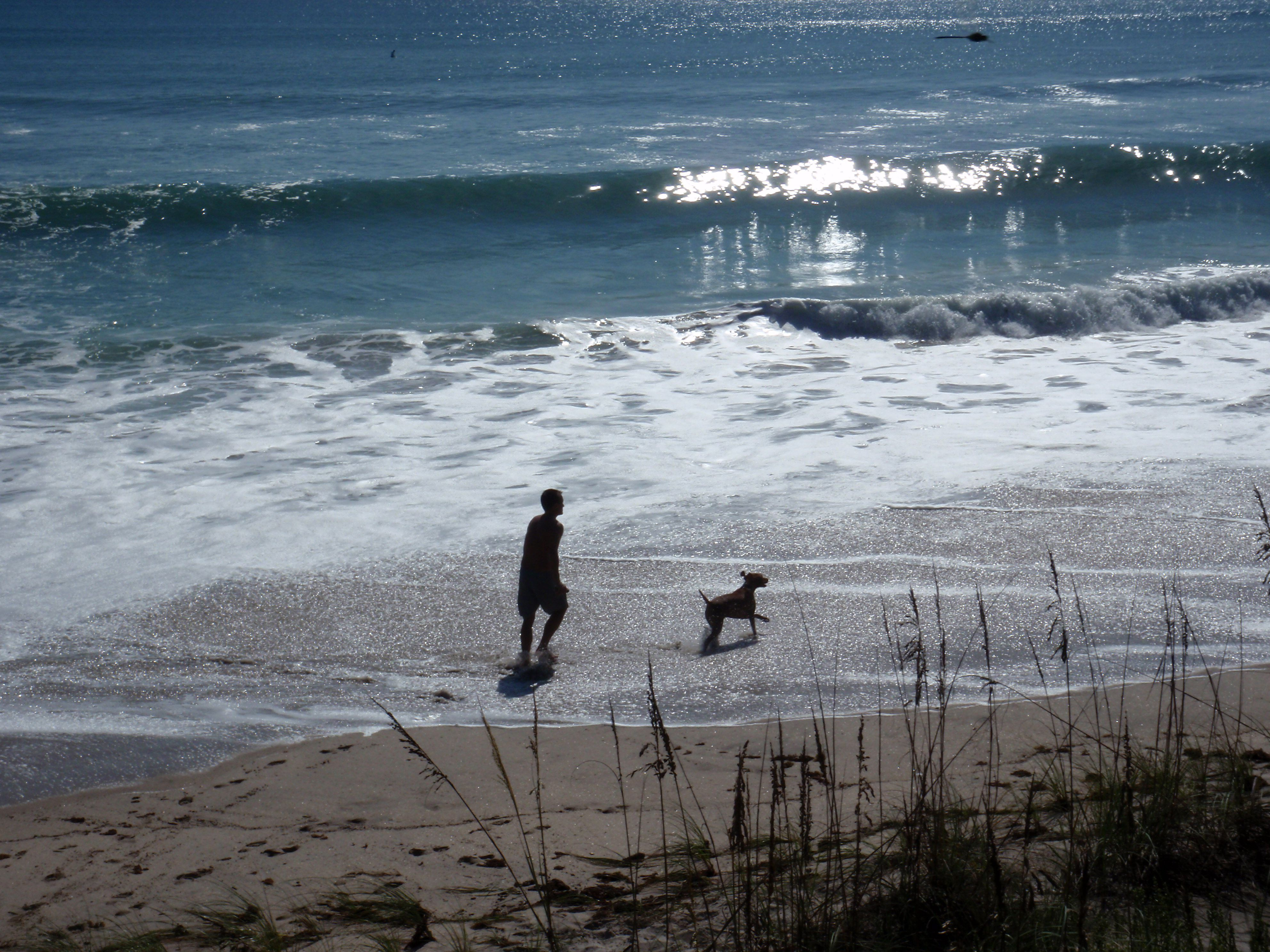 Canova Dog Beach Indian Harbour Fl Our Dogs Love It Here