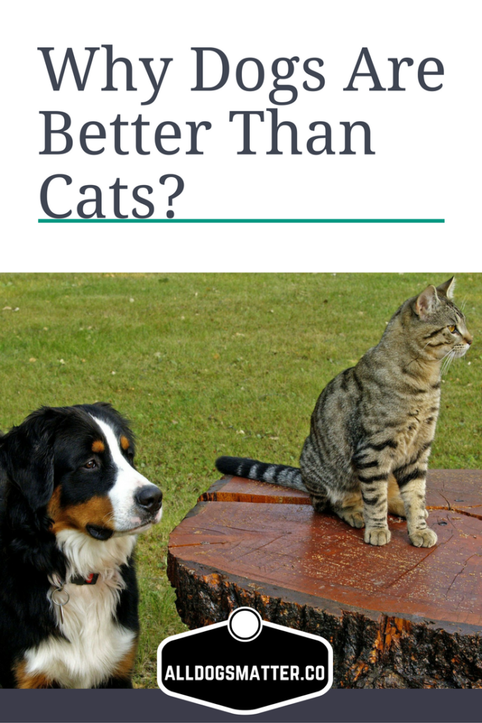 Why Dogs Are Better Than Cats Die hard, Lovers and Dog