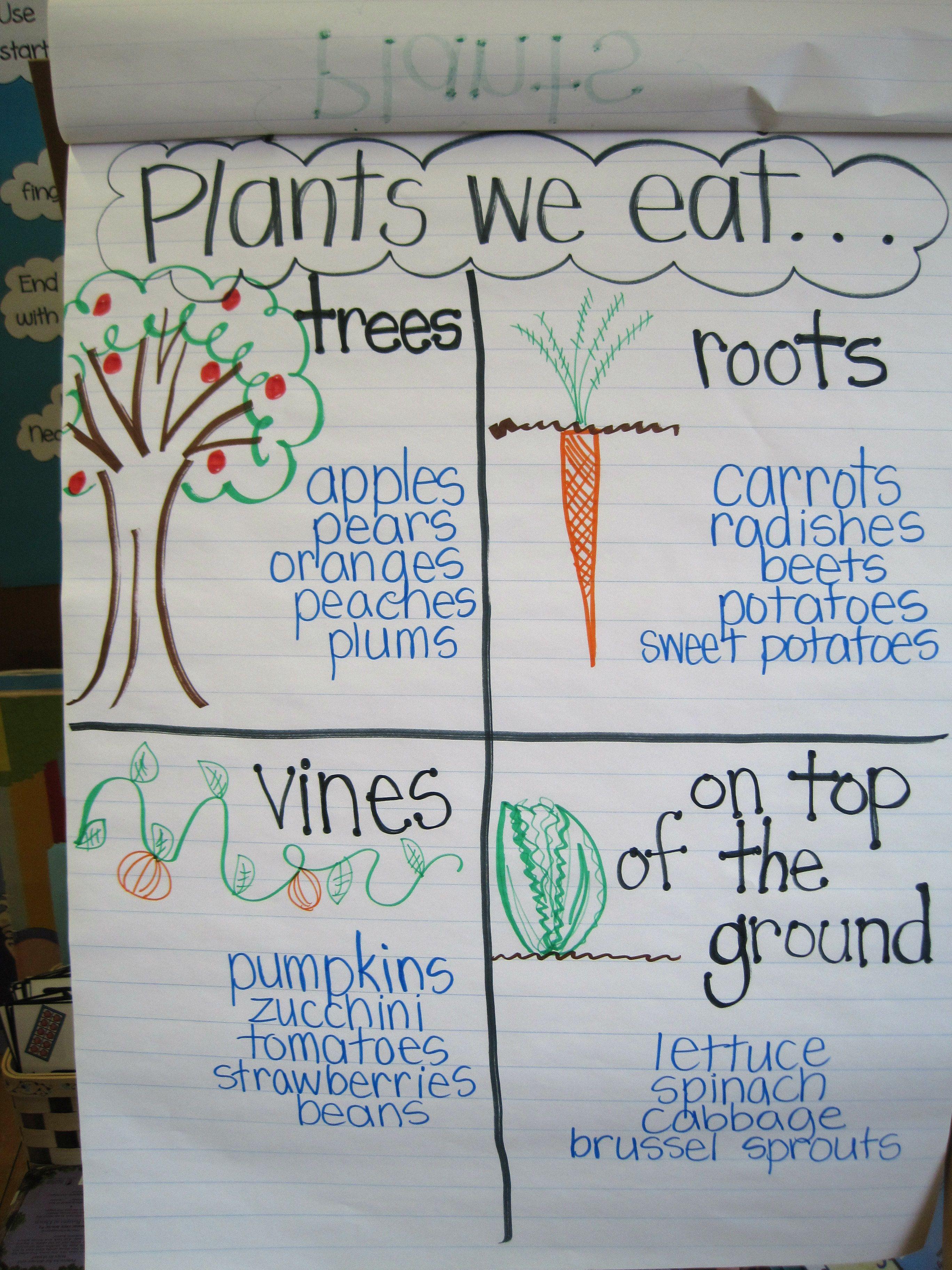 Plants Unit Plan For K 1