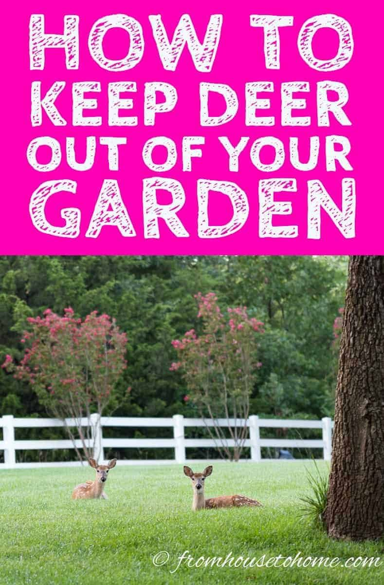 how to keep deer out of your garden for good | landscaping