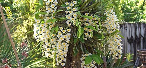 Orchids Grown in Nature #growingorchids