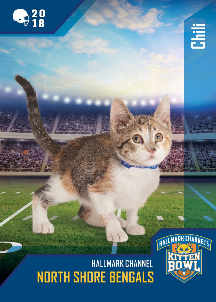 Kitten Bowl V Quartercat Chili Throws A Mean Spiral But Will Her Team North Shore Bengals Take It To The Endzone Fin Kitten Bowls Hallmark Channel Kitten