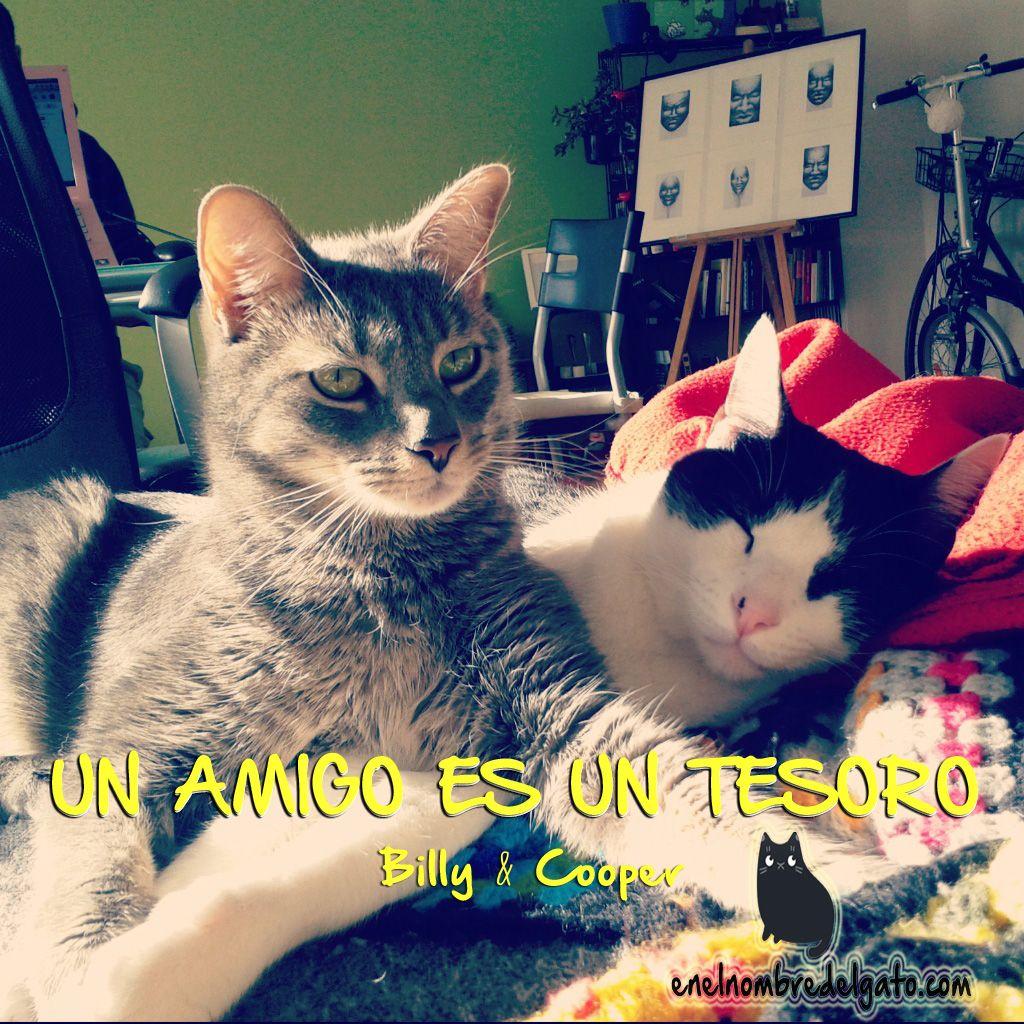 No seré yo quien contradiga a estos dos; ;) ¡Feliz jueves peludo! #gatos