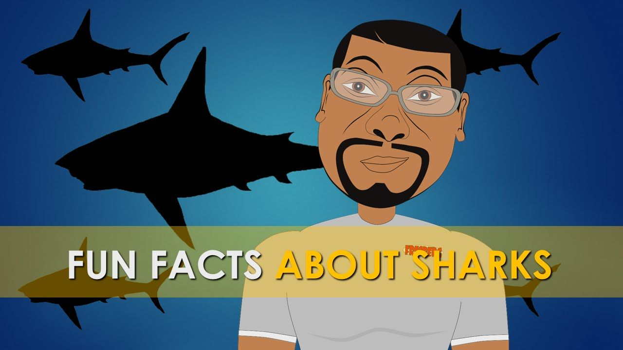 Fun Facts about Sharks for Kids (Educational Videos) Shark Week Cartoon ...