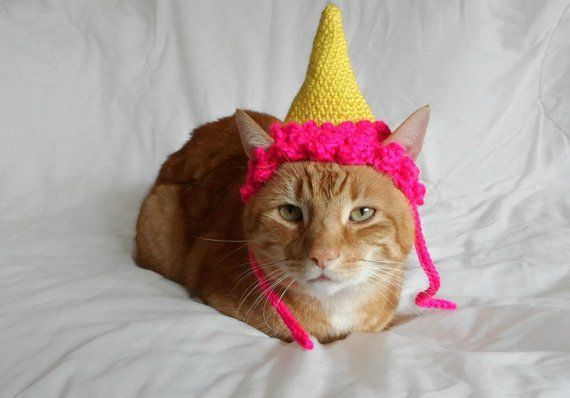 Hat For Cats Cat Clothes Birthday Party