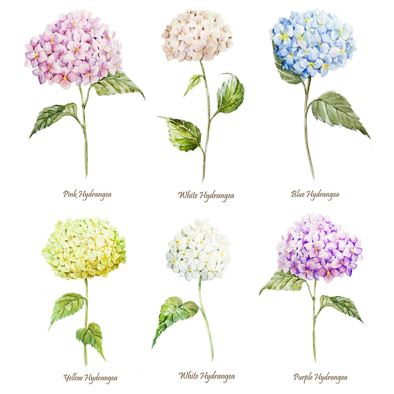 Wedding Flowers For November: Hydrangeas. COLORS: Pink, White, Blue