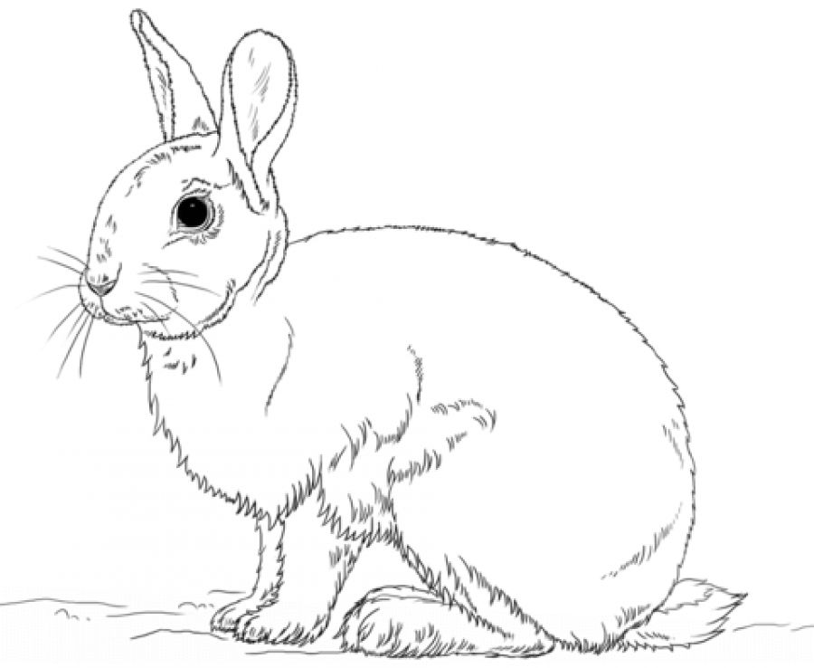 Realistic Rabbit Coloring Pages Letscolorit Com Bunny Coloring Pages Rabbit Colors Bunny Drawing