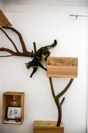 本物の枝を使った自然派キャットウォーク style=