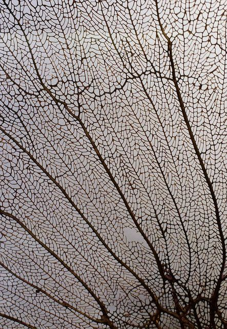 Sea Fan Coral Intricate Patterns In Nature Organic Texture