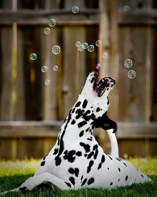 There's nothing cuter than a dog with bubbles :)