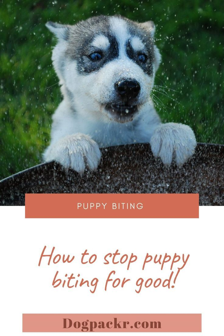 How to stop your puppys biting habit is one of the most