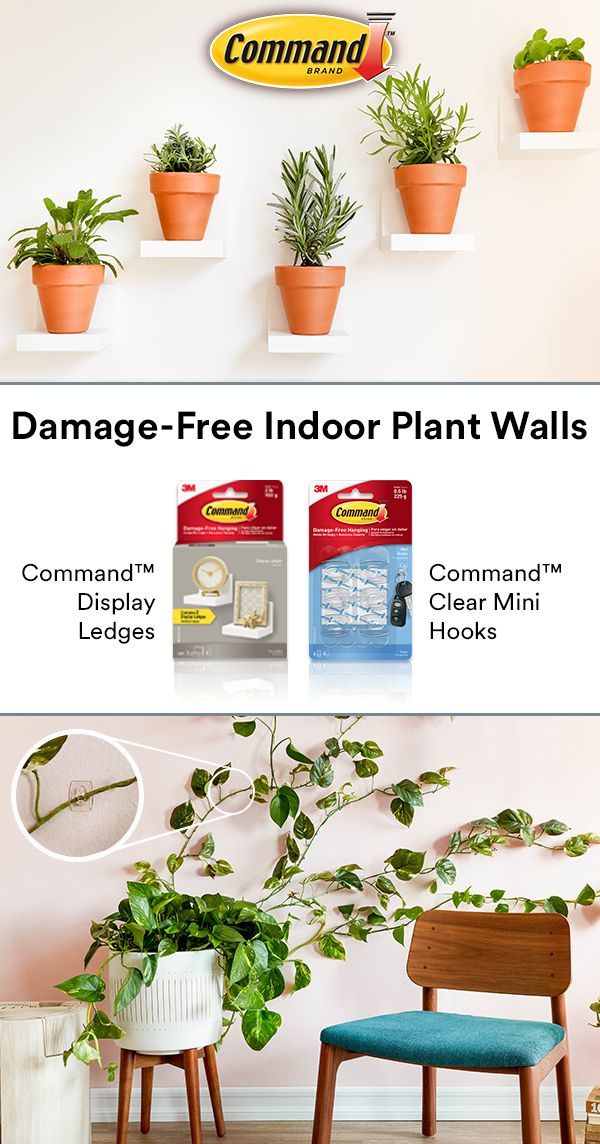 Create A Plant Wall Damage Free With Command Brand Display Small Plants On Command Display Ledges And Grow Your Own Greenery Wa With Images Plants Small Plants