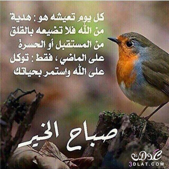 اجمل رسائل وصور الصباح 2020 مسجات دعاء صور صباح الخير حبيبيتي 2020 مسجات صباحيه رائعه Animals Anama Bird