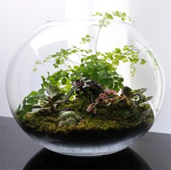 Terrariums Create Your Own Dwarf Plants That Like Low Light And