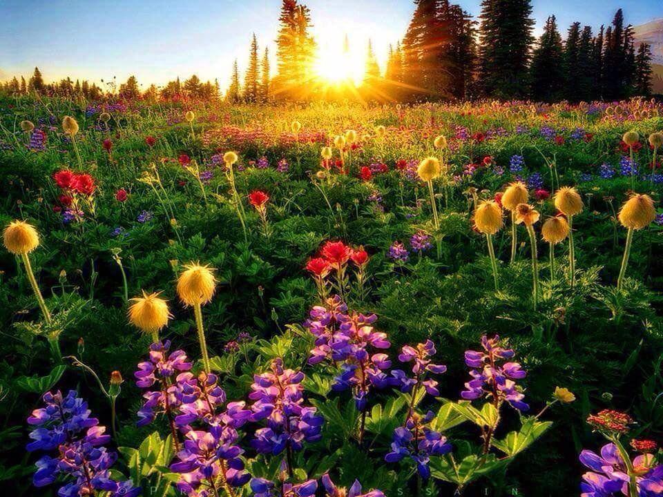 Flores Para Bens Sobrinha: Картинки по запросу Mensagem De Aniversário De Sobrinha