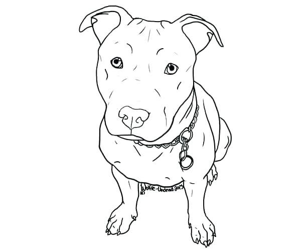colorear pitbull para para para pit bull juegos de colorear perros ...