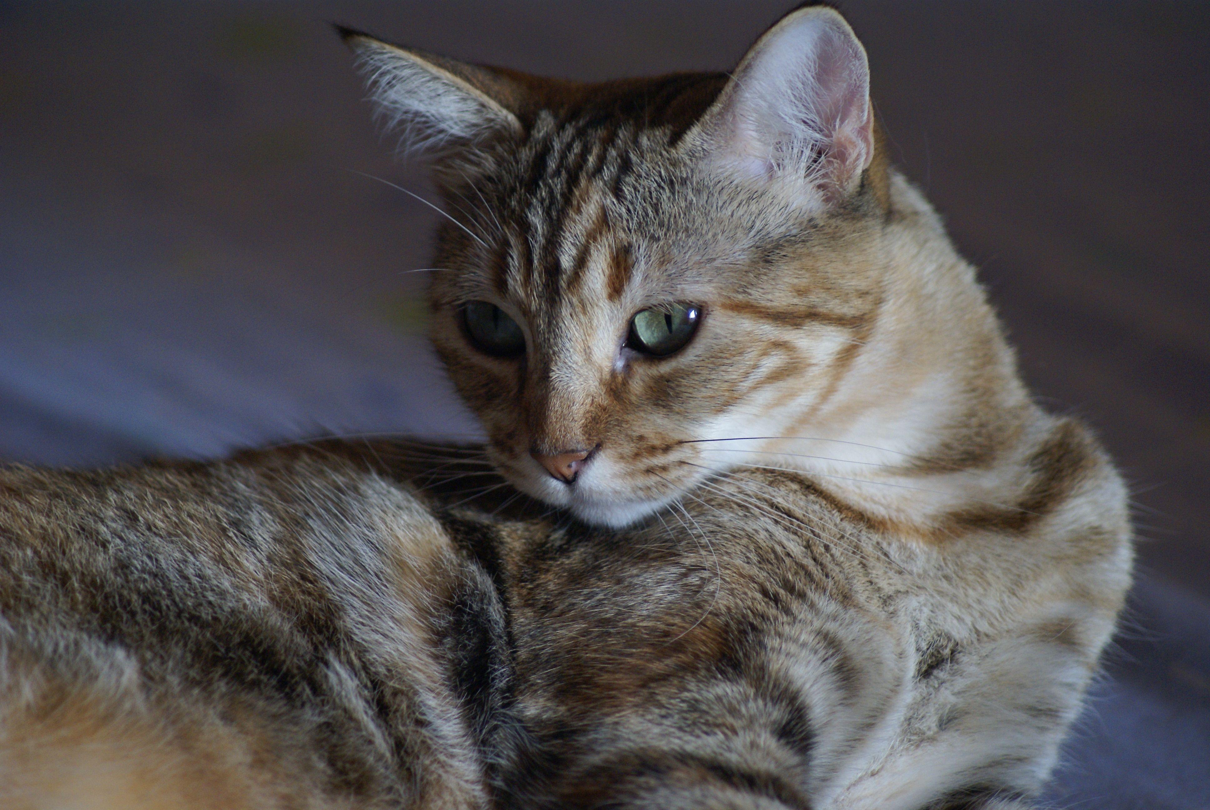 Noa, preciosa gatita encontrada en la puerta de casa