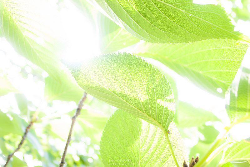 なつのひかり あつくはないさ    Green color glowing    Light of SUMMER 2014