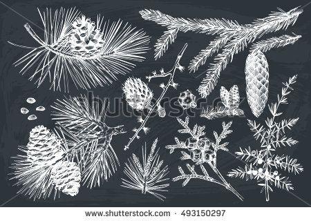 Vector Collection Hand Drawn Botanical Conifers Stock-Vektorgrafik (Lizenzfrei) 493150297